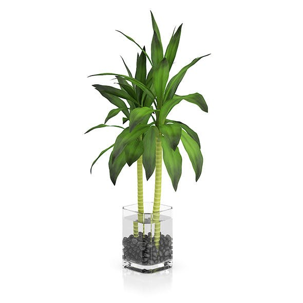 Bamboo Plant in Glass Pot - 3DOcean Item for Sale