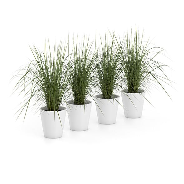 Four Plants in White Pots - 3DOcean Item for Sale
