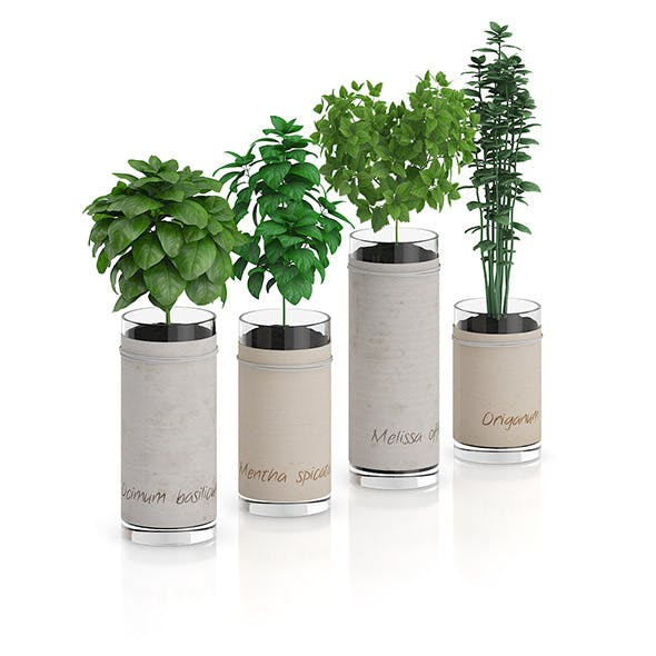 Four Herbs in Glass Pots - 3DOcean Item for Sale