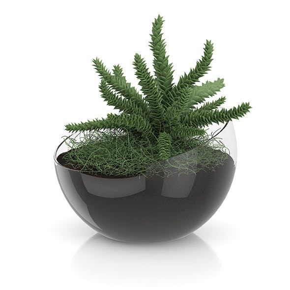 Plant in Sphere Glass Pot - 3DOcean Item for Sale