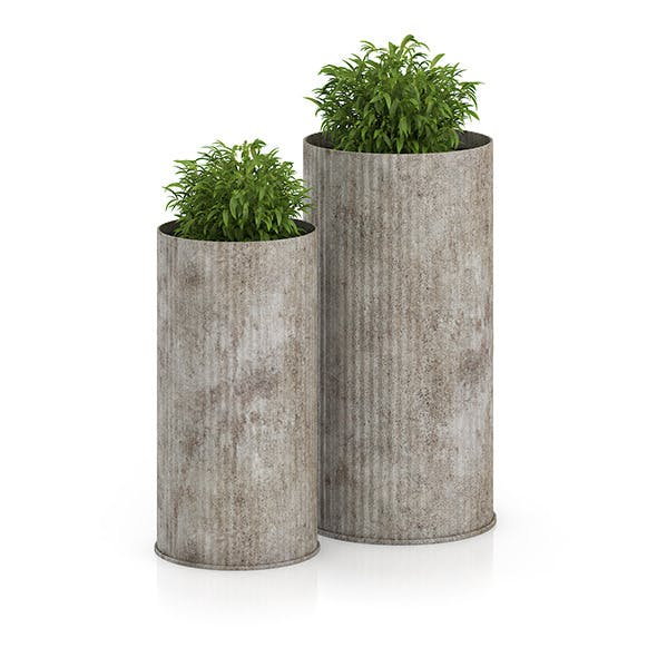 Two Plants in Large Pots - 3DOcean Item for Sale