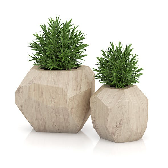 Two Plants in Modern Wooden Pots - 3DOcean Item for Sale