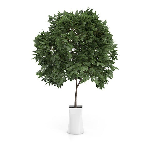Small Tree in White Pot - 3DOcean Item for Sale