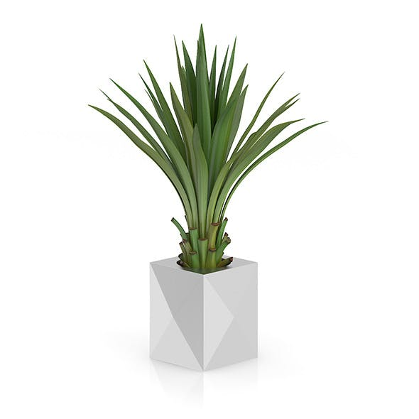Small Palm in Metal Pot