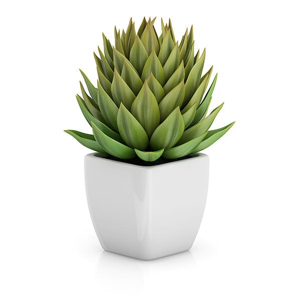 Small Plant in White Pot 1 - 3DOcean Item for Sale