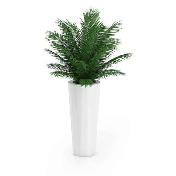 Palm Tree in Round Pot 4