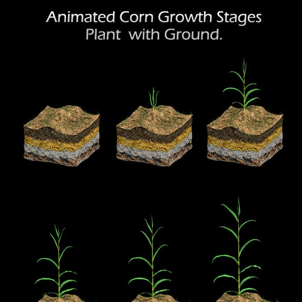 Corn Growth Plant States with Ground