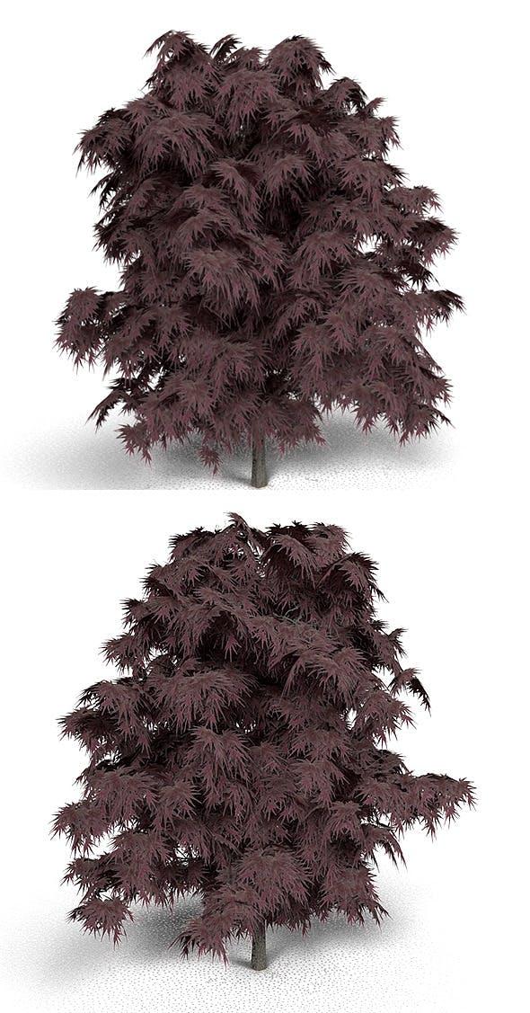 Emperor Japanese Maple - 3DOcean Item for Sale