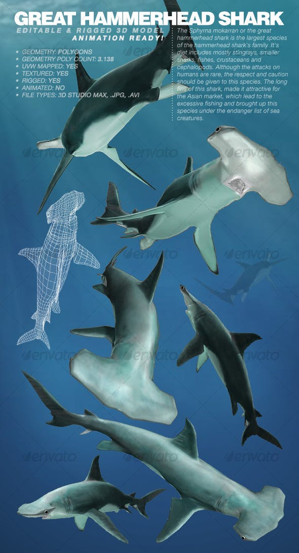 Great Hammerhead Shark rigged 3Ds model - 3DOcean Item for Sale