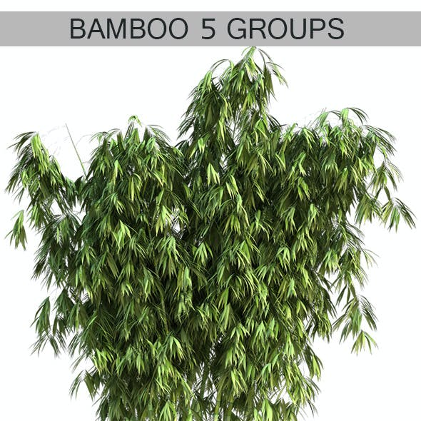 5 Groups of Bamboos