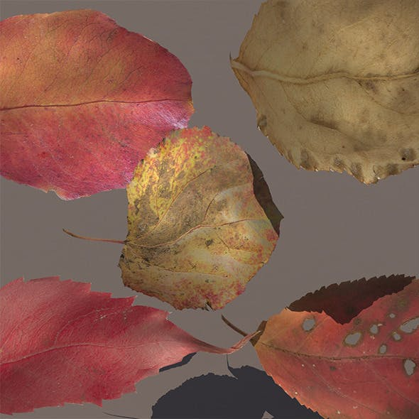 Autumn Fall Leaves PACK Low Poly 3d Model