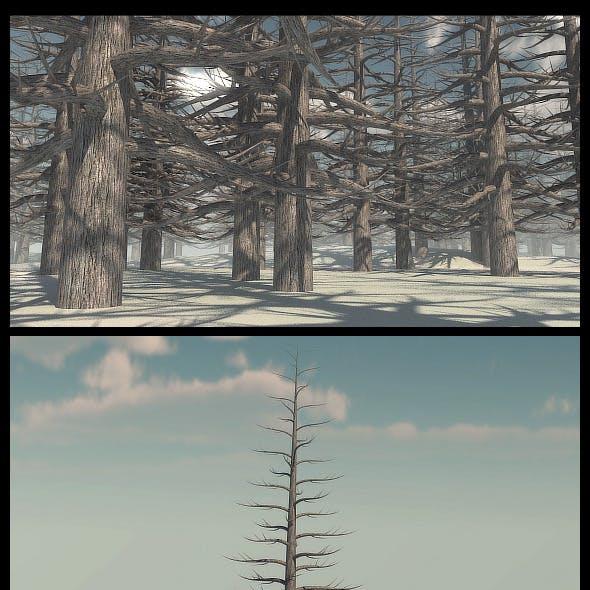 Dead Pine Tree V2
