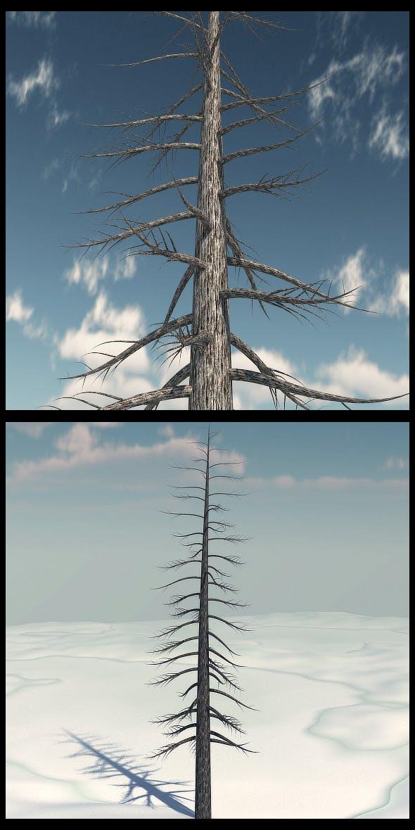 Dead Pine Tree V3 - 3DOcean Item for Sale