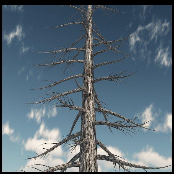 Dead Pine Tree V3