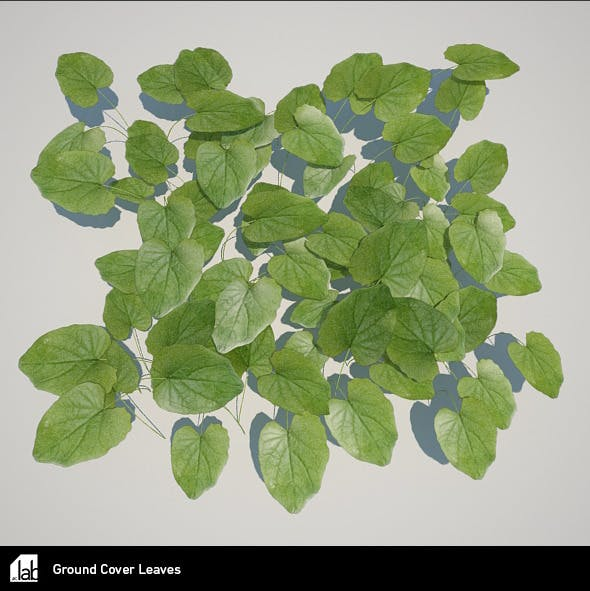 Ground Cover Leaves - 3DOcean Item for Sale