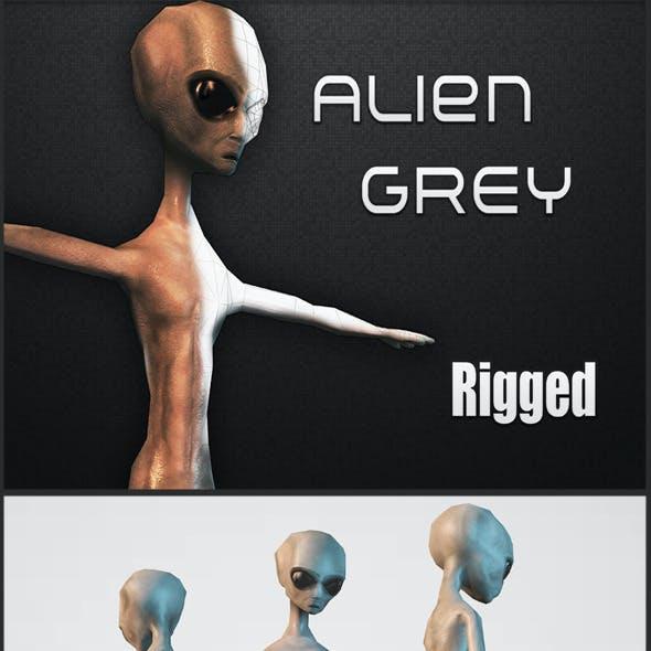 Alien Grey