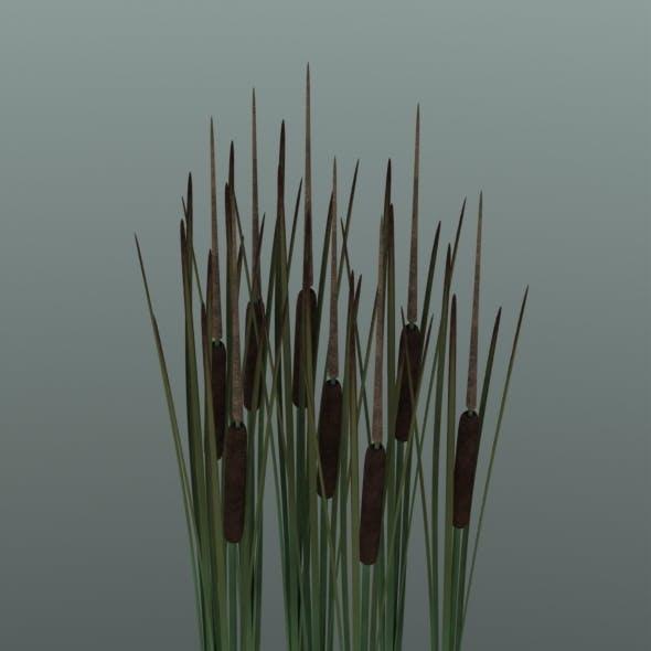 Reedmace