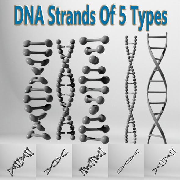 DNA Strands Of 5 Types
