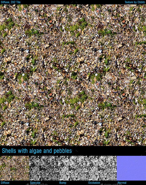 Shell ground with algae and pebbles - 3DOcean Item for Sale