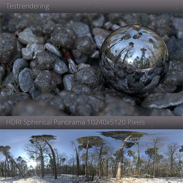 HDRI - Winter Forest