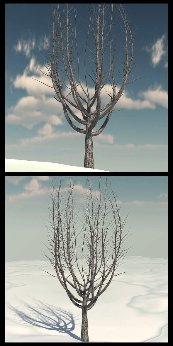 Winter Tree 1 - 3DOcean Item for Sale