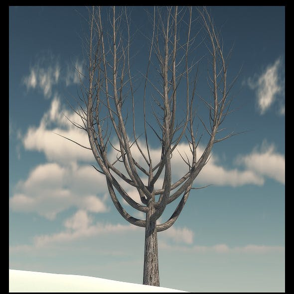 Winter Tree 1