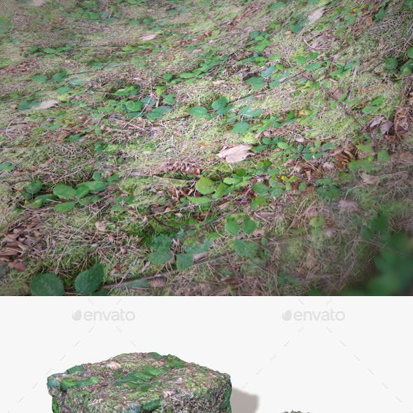 Seamless Brambles Ground Texture