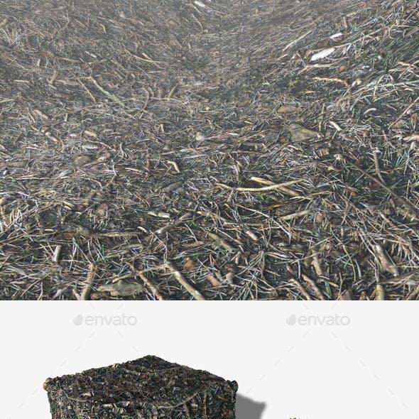 Forest Dirt Texture
