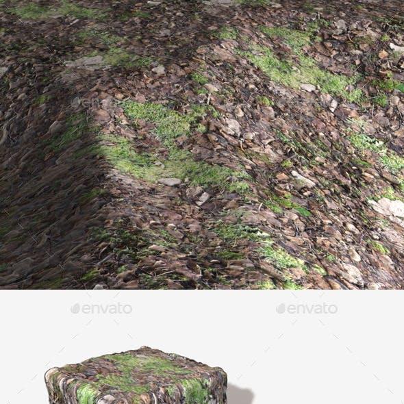 Seamless Forest Moss Texture