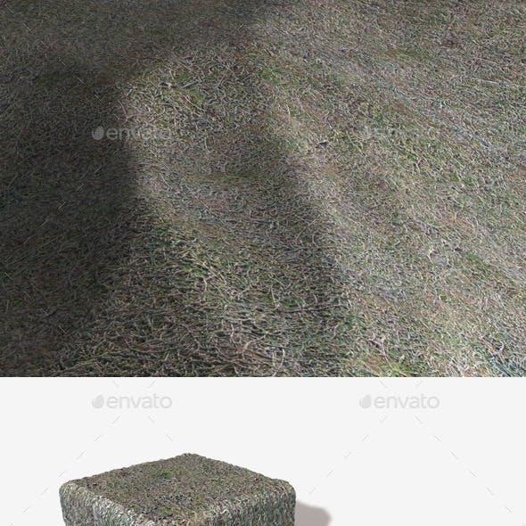 Seamless Frosty Grass Texture