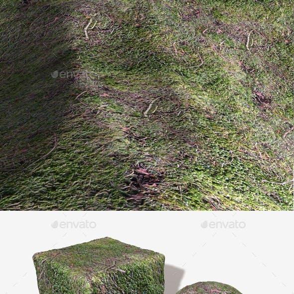 Seamless Moss Texture