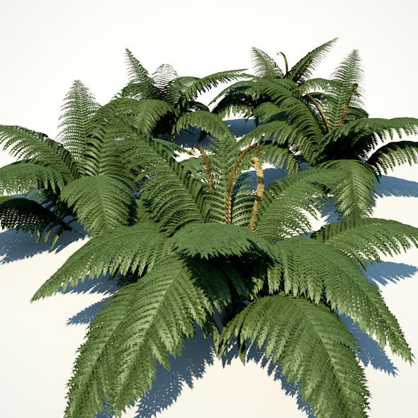Fern Connection 1