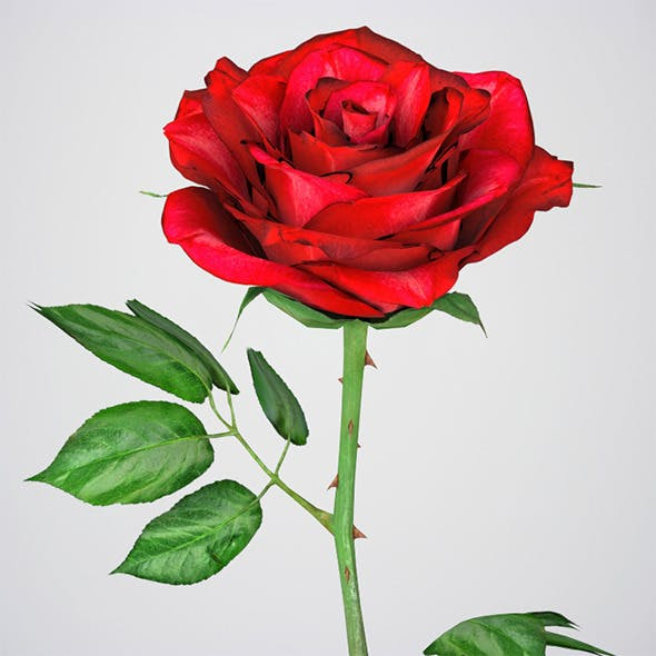 Realistic 3D Rose Flower