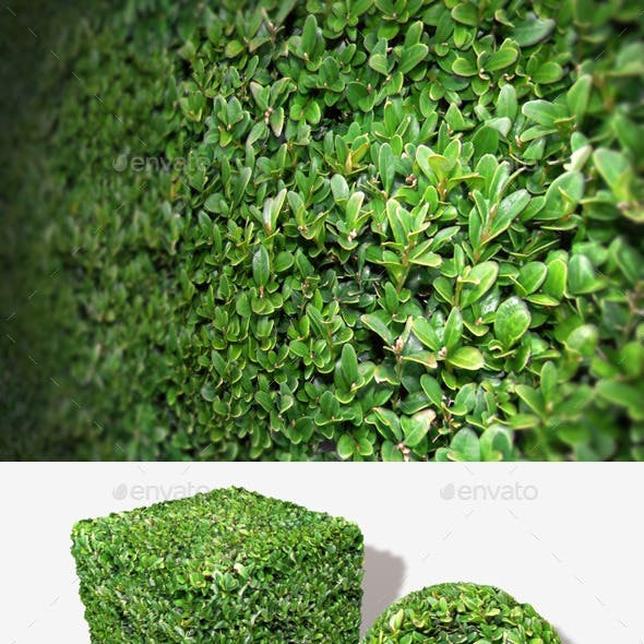 Shrub Seamless Texture