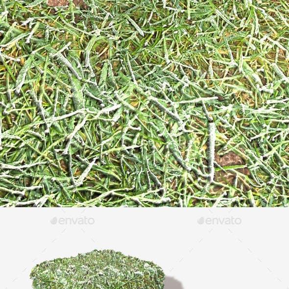Grass Frost Close Seamless Texture