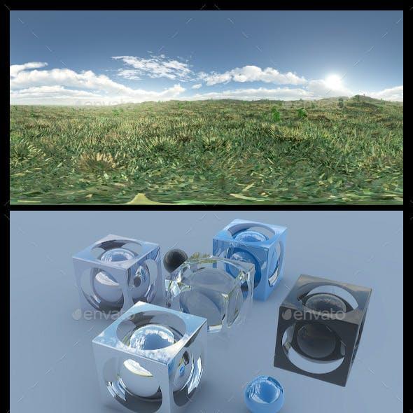 Open Grass Field 3 - HDRI