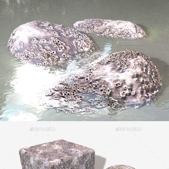 Barnacle Crustacean Seamless Texture