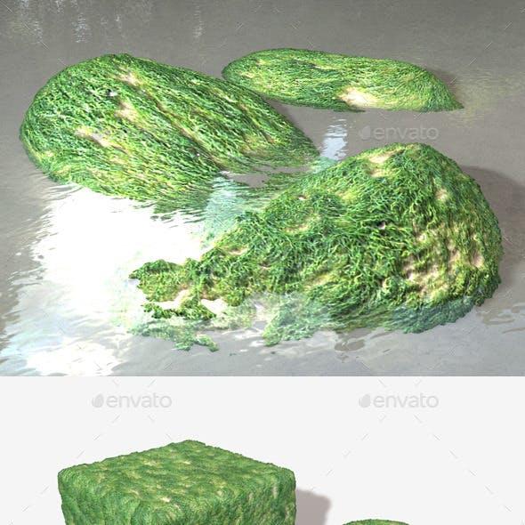 Seaweed Fine Seamless Texture
