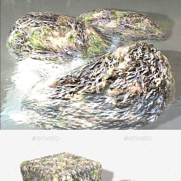 Seaweed Seamless Texture
