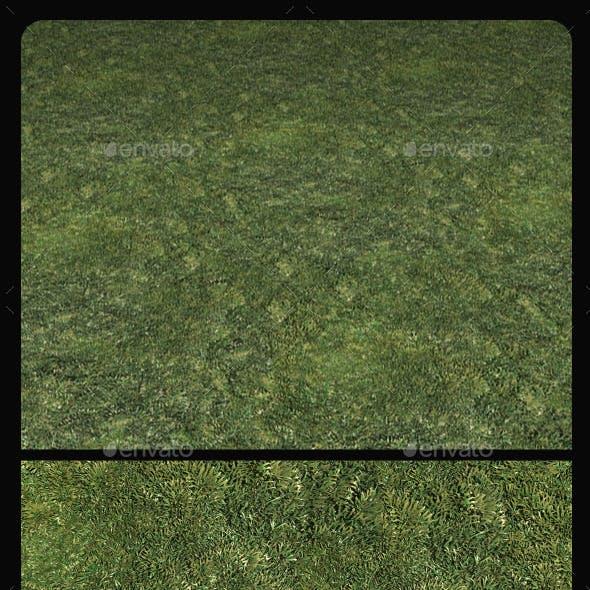 Grass Hi-Res Tile Texture