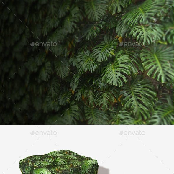 Jungle Background Seamless Texture