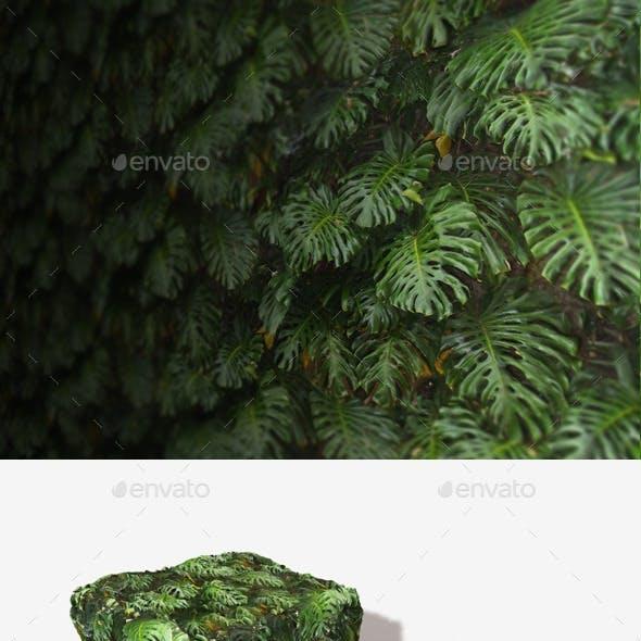 Jungle Background Seamless Texture