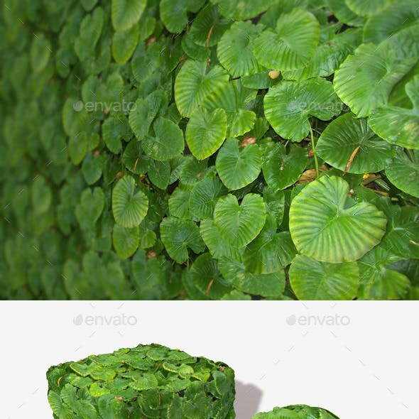 Jungle Leaves Background Seamless Texture