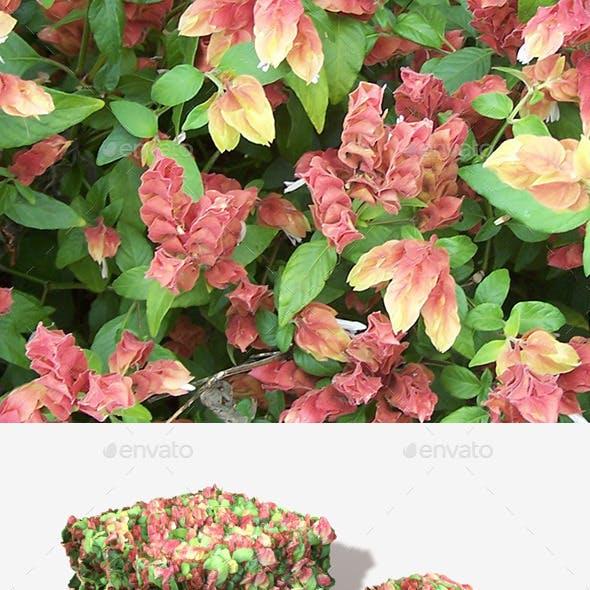Strange Plants Seamless Texture