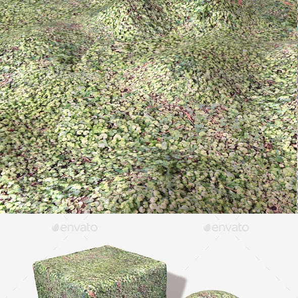 Clover Ground Seamless Texture