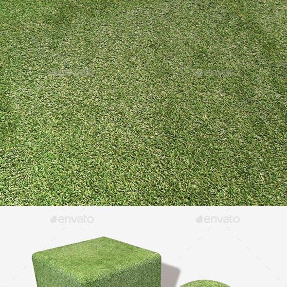 Astroturf Seamless Texture