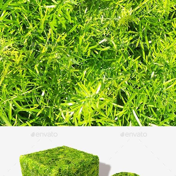 Fern Leaves Seamless Texture