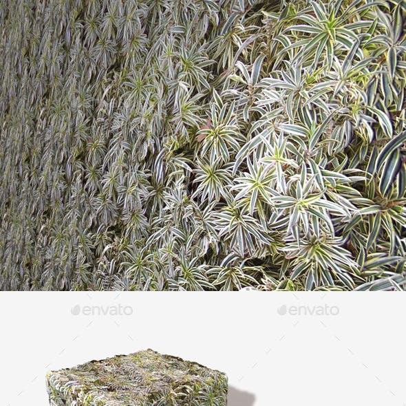 Spider Plants Seamless Texture