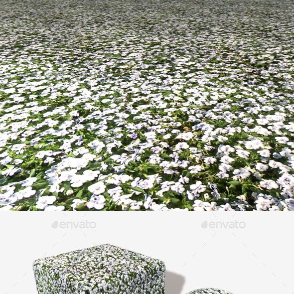 White Flowerbed Seamless Texture