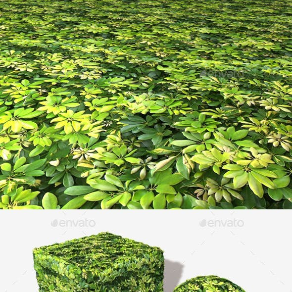 Small Jungle Leaves Seamless Texture